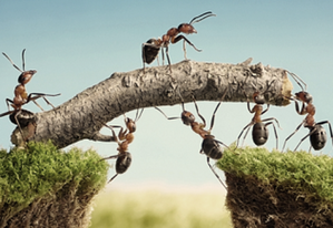 Ants trying to climb mountain via a tree