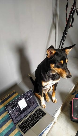 a black dog sitting next to a laptop